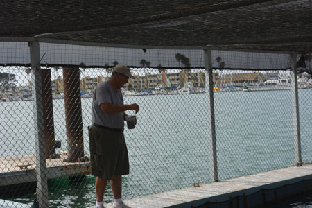 Feeding White Sea Bass at the Ventura County White Sea Bass Enhancement Facility at Channel Islands Harbor.