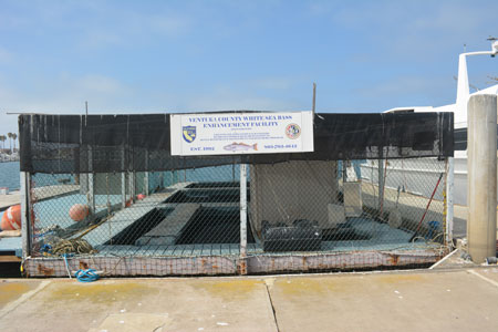 Ventura County White Sea Bass Enhancement Facility at Channel Islands Harbor.